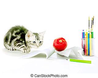 educación, plano de fondo, concepto, con, un, kitten., espalda, a, school.