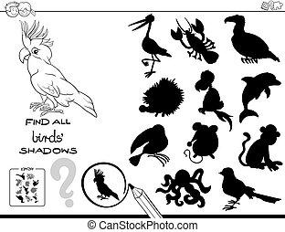 educacional, cor, jogo, livro, sombra, pássaros
