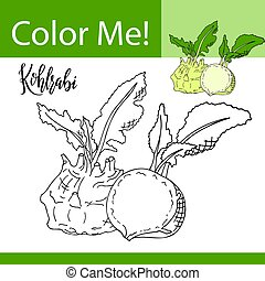 Education coloring page with vegetable. Hand drawn vector illustration of kohlrabi