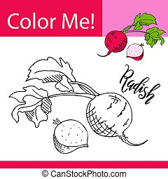 Education coloring page with vegetable. Hand drawn vector illustration of radish.