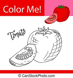 Education coloring page with vegetable. Hand drawn vector illustration of tomato