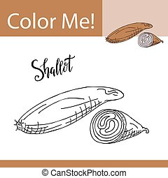 Education coloring page with vegetable. Hand drawn vector illustration of shallot.