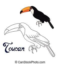 Educational game coloring book toucan bird vector