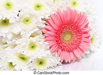 een, bouquetten, van, chrysanthemums, gerbera