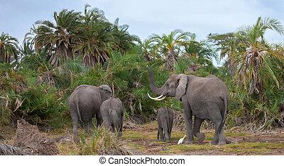 een, elefant, gezin, in, de, savanne, van, kenia