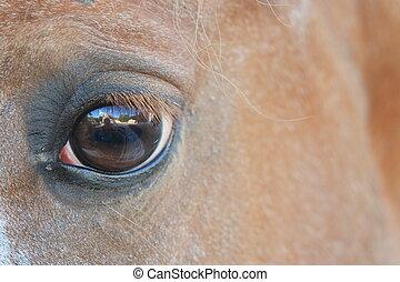 een, horse\'s, geest
