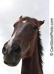 een, horse\'s, houding