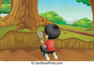 een, jongen, studerend , de, grond, in, de, bos