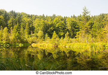 een, klein meer, in, de, bos