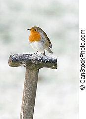 een, robin, perched, op, een, vork, handvat, in, de, sneeuw