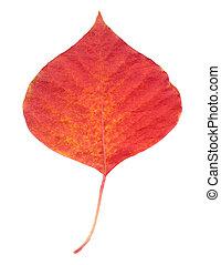 een, rood blad