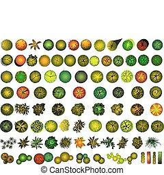 een, set, van, boomkruin, symbolen