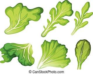 een, set, van, salade blad