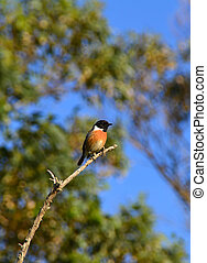 een, vogel, op een tak