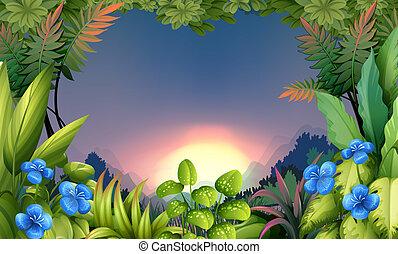 een, vroege morgen, aanzicht, op, de, bos