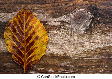 eenzaam, herfstblad, hout, achtergrond