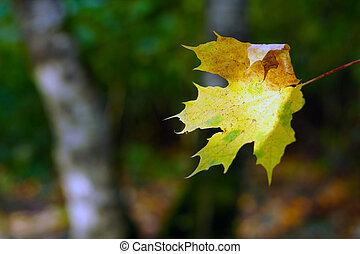 eenzaam, herfstblad, op, de, bestrating