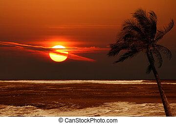 eenzaam, palmboom, op, zonopkomst, met, dramatisch, kleuren