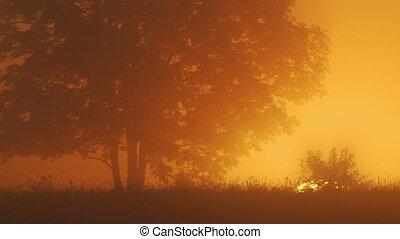 eenzame boom, op, zonopkomst