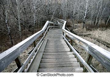 Eerie Stairway - Looking down eeried stairs in the woods