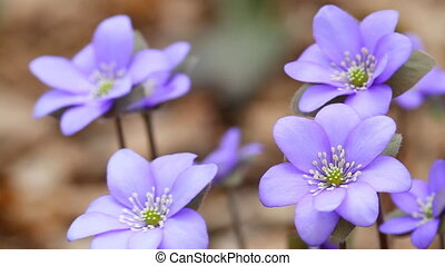 eerst, lentebloemen
