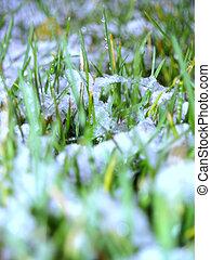 eerst, sneeuw, op, wei