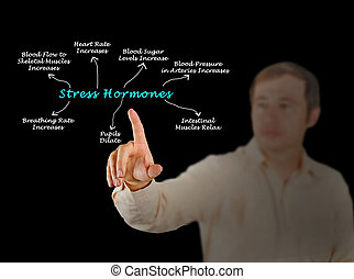 efectos, hormonas, énfasis