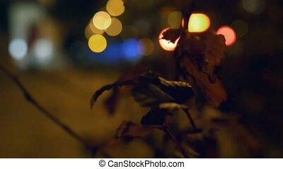 effect., miasto, bokeh, ulica, noc
