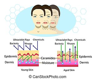 Effect of environment on the skin, three types of face, vector illustration and diagram for cosmetological illustration