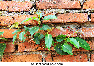 Efforts of the tree , Tree through the wall