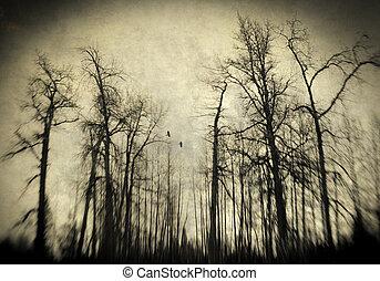 effrayant, bois, hiver