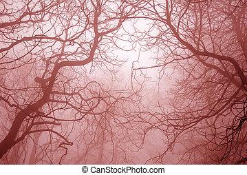 effrayant, branches, arbre, nu, forêt, mystérieux, brumeux