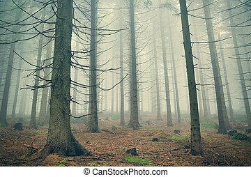 effrayant, brouillard, forêt dense, montagne