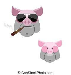effrayant, cigar., fâché, boar's, tête, cochon, arrière-plan., blanc