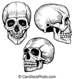 effrayant, mort, collection, main, vecteur, humain, dessiné, crânes