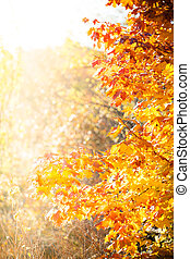 efterår, ahorn, træer, baggrund