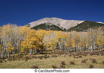 efterår, bjerg, scene