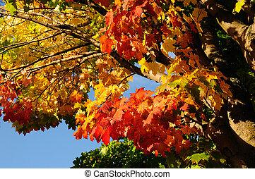 efterår, farver