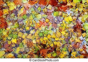 efterår, farverig, blade, vand, baggrund, fald