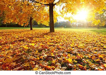 efterår, farverig