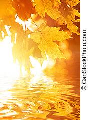 efterår forlader, jeg reflekterede ind, rendered, vand