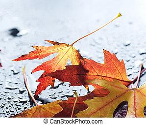 efterår forlader