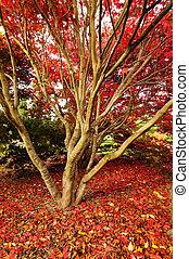 efterår, glory, rød, gulvtæppe