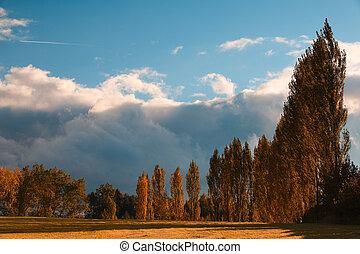 efterår, gyde, i, den, træer
