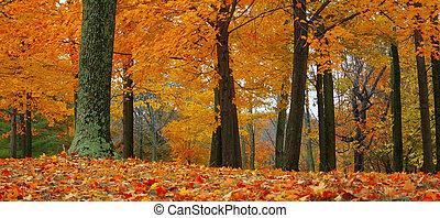 efterår, ind, den, skov
