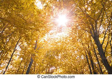 efterår, natur