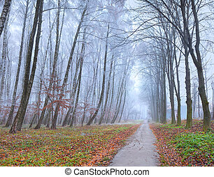 efterår, sceneri, ind, den, park., træer, hos, hoarfrost,...