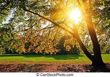 efterår, solfyldt, løvværk
