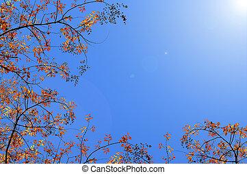 efterår træ