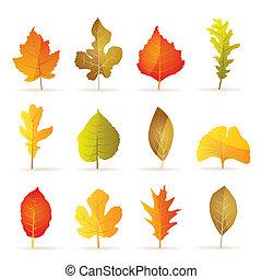 efterår, træ, forskellige, blad, arter